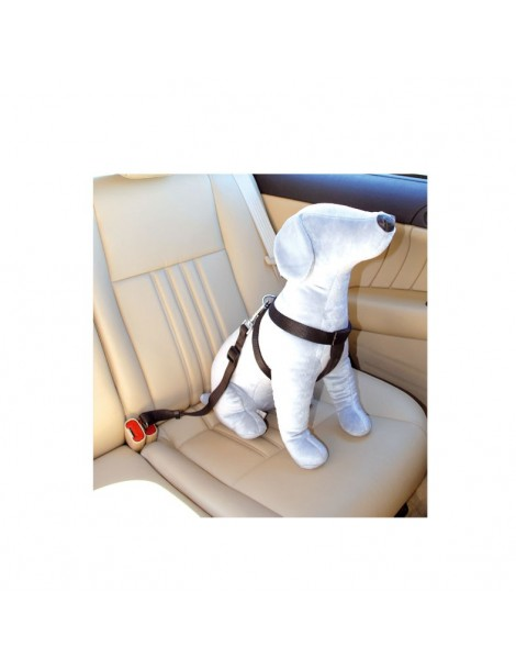 2-in-1 safety leash/harness