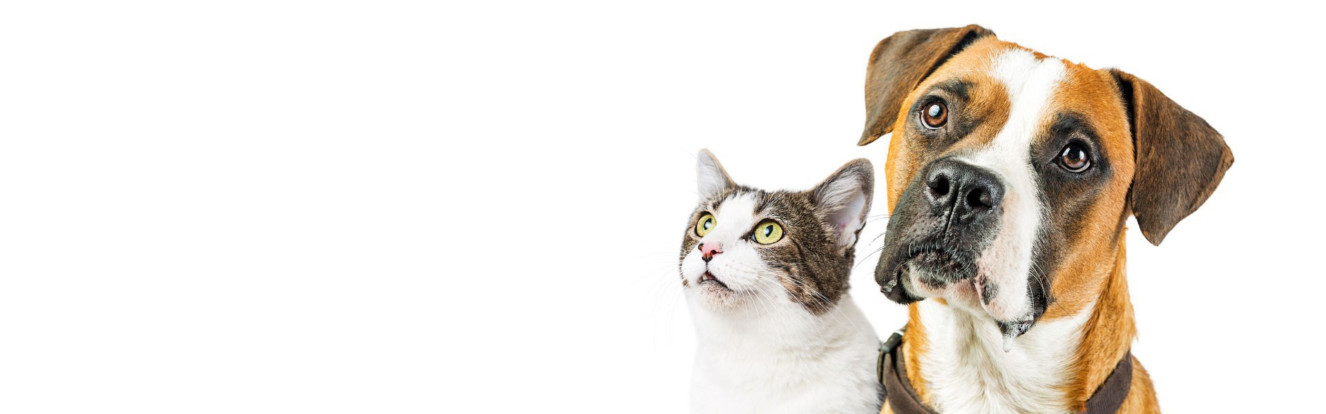 ΚΤΗΝΙΑΤΡΙΚΟΣ ΕΞΟΠΛΙΣΜΟΣ & ΕΙΔΗ PET  Δημιουργήστε επαγγελματικό λογαριασμό για να αποκτήσετε πρόσβαση